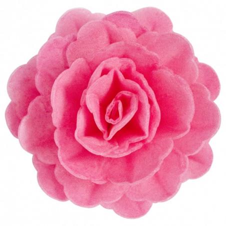 Róża waflowa duża fuksja