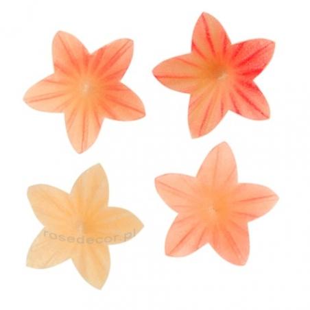 Kwiaty mini różowe ombre
