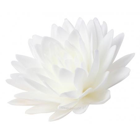 Kwiat waflowy Aster peoniowy duży biały